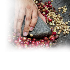 image of Coffee Bean Sourcing